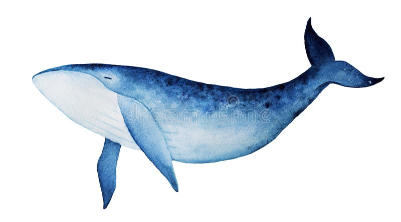 Blue whale watercolor illustration. stock illustration