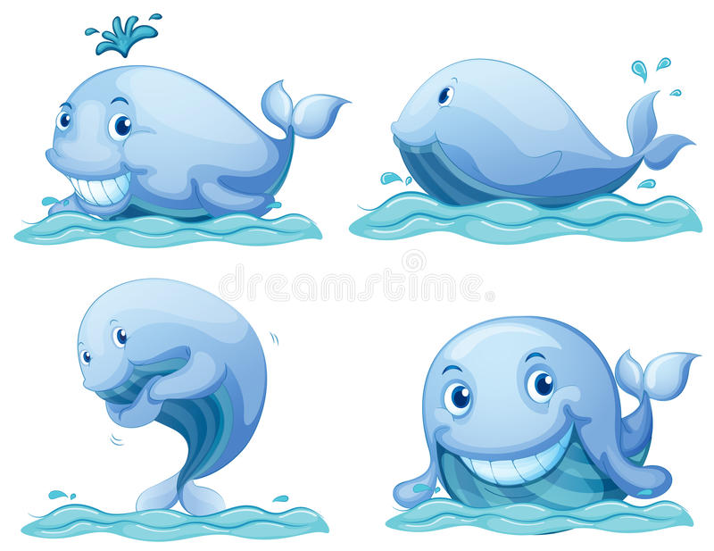 Blue whales vector illustration