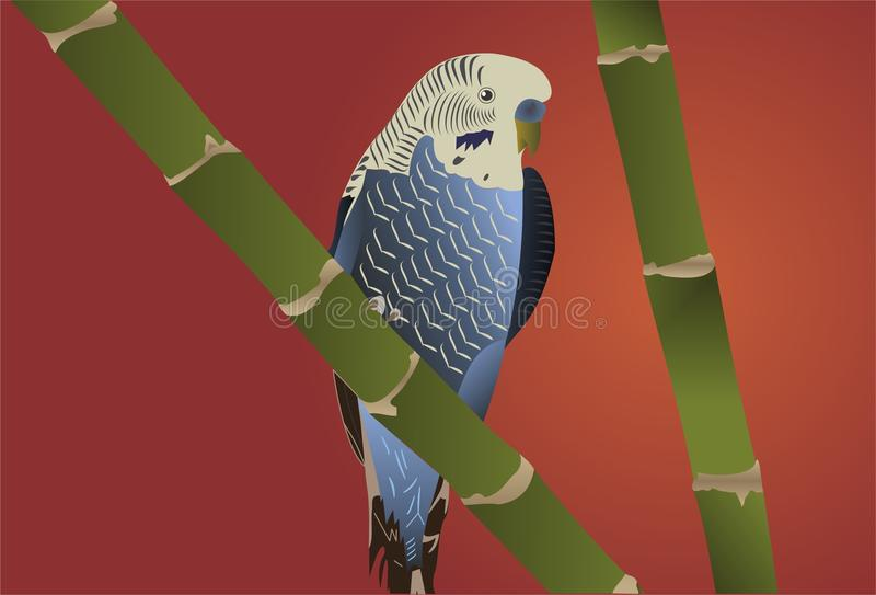 Blue And White Budgie royalty free stock photo