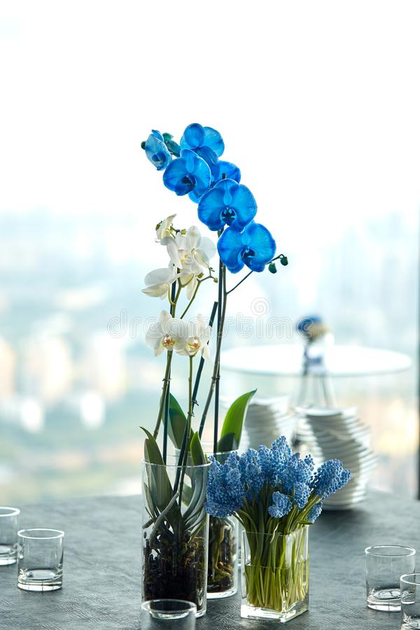 Blue and white orchids in a vase on the table, a beautiful arrangement of flowers in the office. stock photo