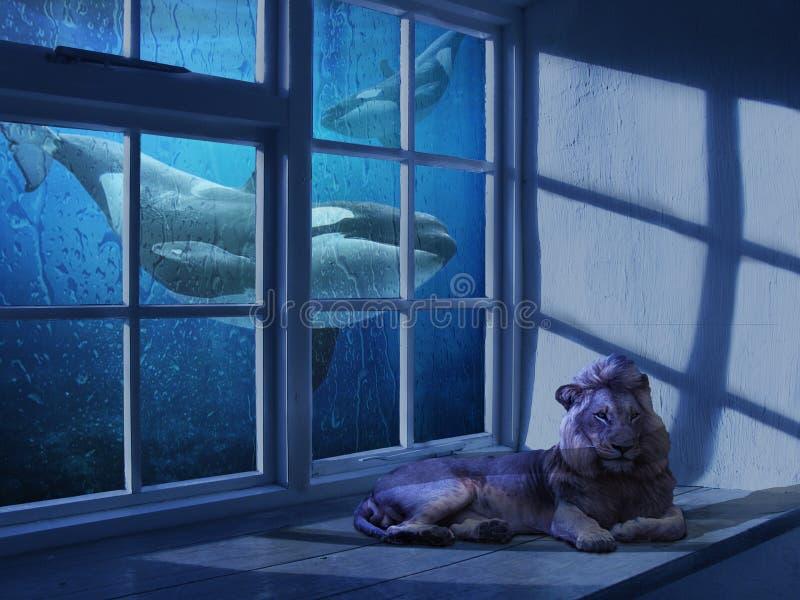 Blue, Window, Screenshot, Glass stock images