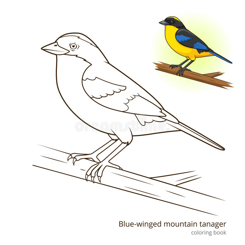 Color Book Birds - Worksheet & Coloring Pages