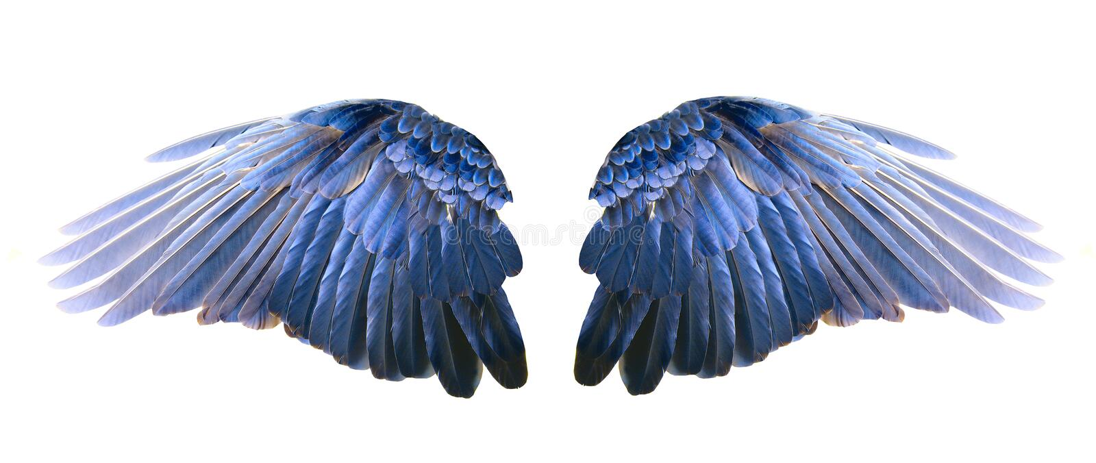 Blue wings. On a white background