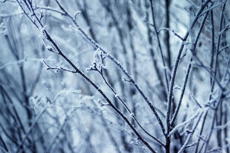 Winter branches in the forest royalty free stock photography