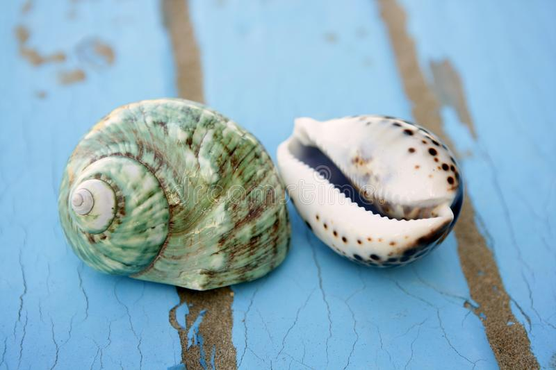 Blue wooden beach floor green sea shell royalty free stock photography