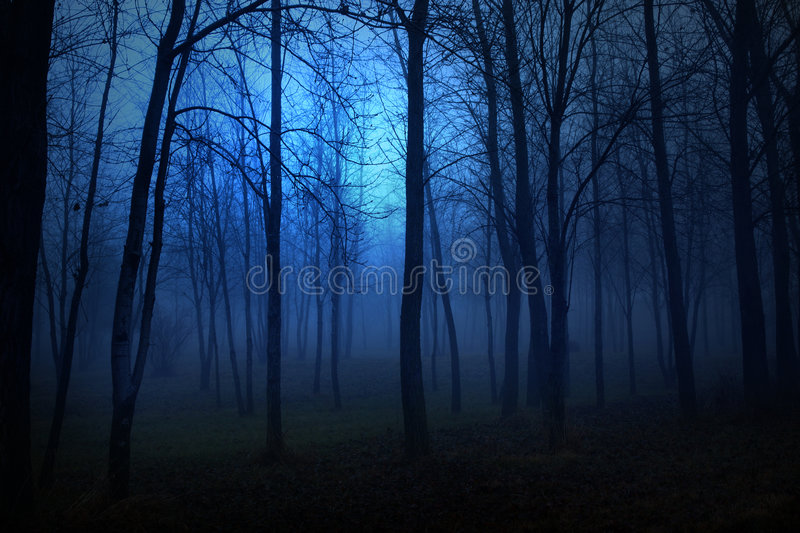 Blue Woods royalty free stock images