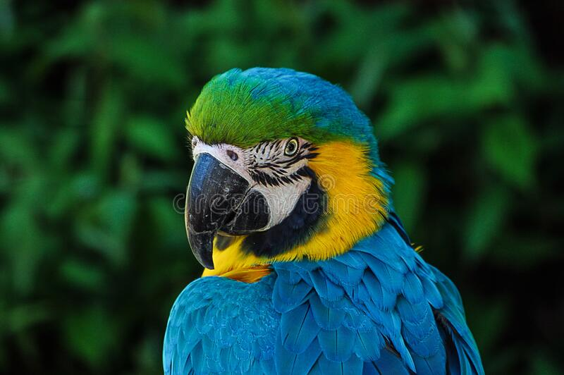 Blue And Yellow Bird Free Public Domain Cc0 Image