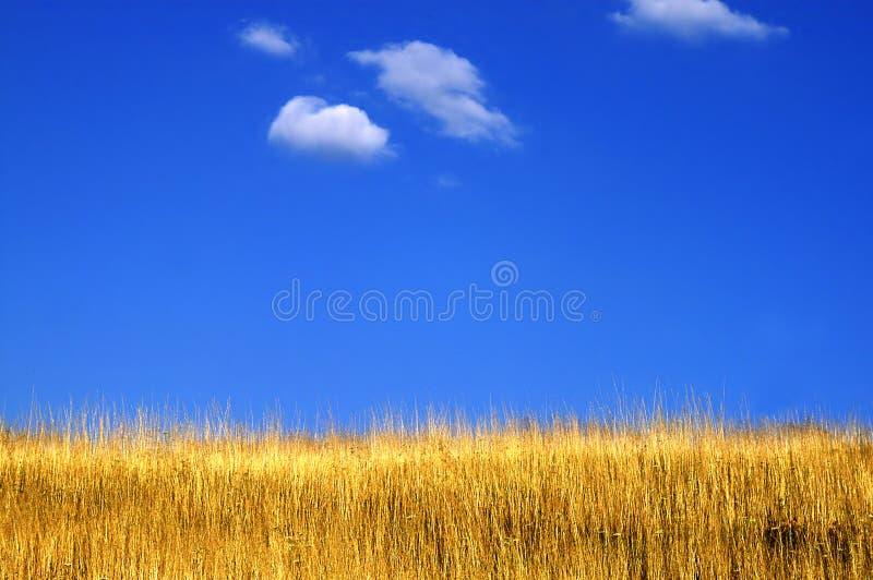 Blue - yellow horizon royalty free stock photography