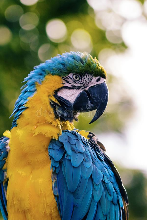 Blue And Yellow Macaw Free Public Domain Cc0 Image