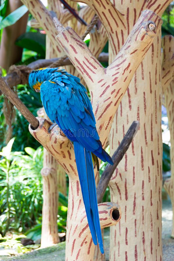 The blue-and-yellow macaw, also known as the blue-and-gold macaw. Is a large South American parrot with blue top parts and yellow under parts. It is a member stock images