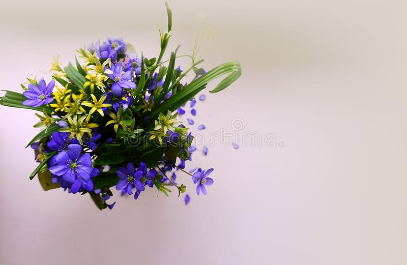 Blue and yellow spring flowers on a white background stock images