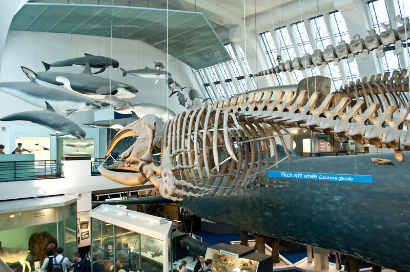 Blue Zone Of  Natural History Museum Editorial Photography