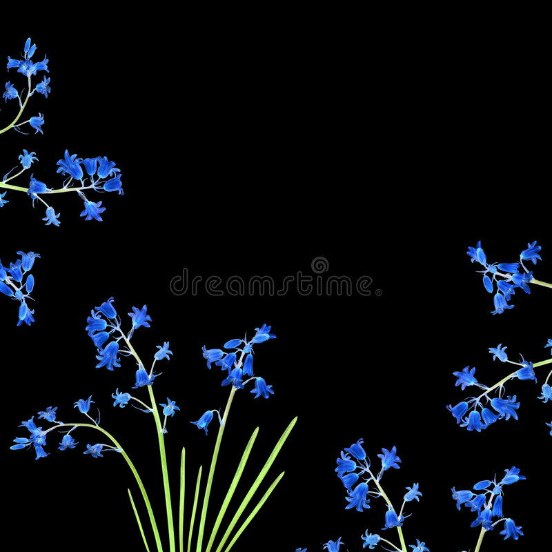 Bluebell Beauty. Abstract design of bluebell flowers forming a border, over black background royalty free stock photo