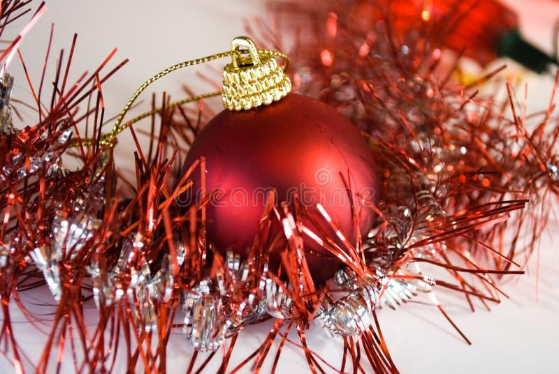 Bluebell do Natal imagem de stock royalty free