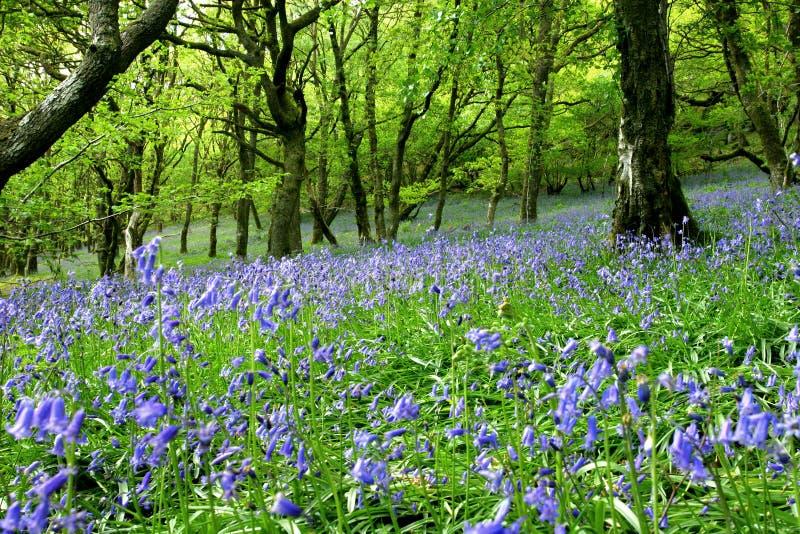 Bluebell Fantasy Land royalty free stock photos