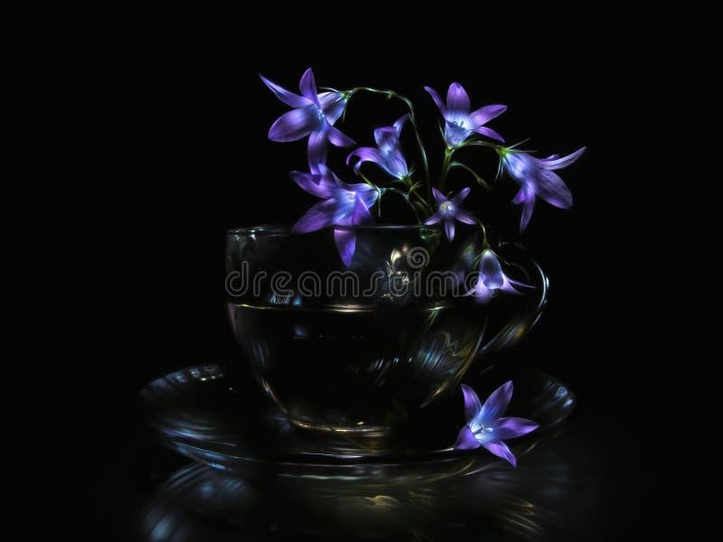 Bluebell fiorisce in tazza di vetro trasparente sul piattino contro fondo nero immagine stock