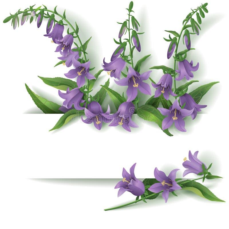 Bluebell flowers royalty free illustration