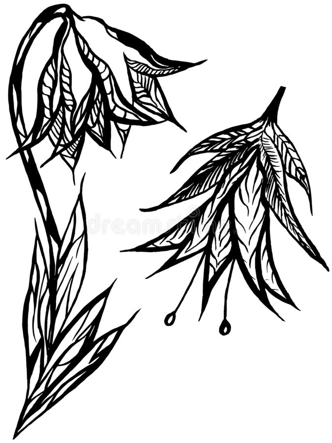Bluebell flowers with zentangle elements. Antistress freehand sketch, tattoo style, background print vector illustration