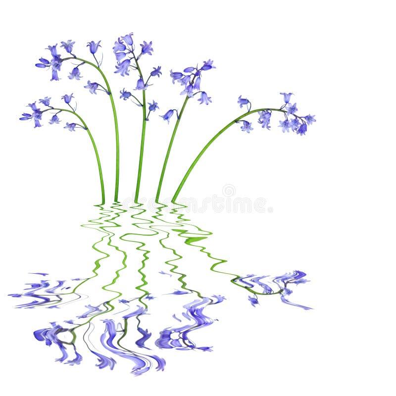 Bluebell Kwiaty Obrazy Stock