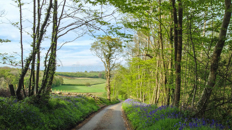 Bluebell Road stock photo