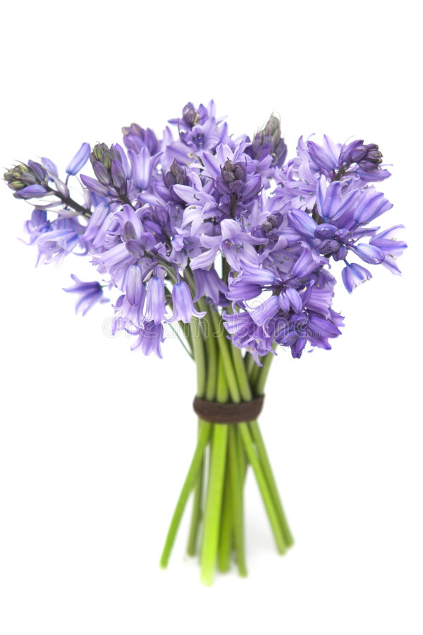 Download Bluebells stock image. Image of flora, bouquet, flower - 2440981