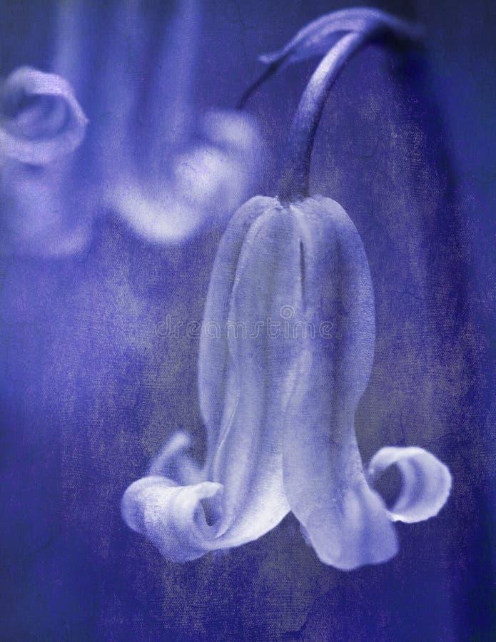 Bluebells abstractos foto de archivo libre de regalías