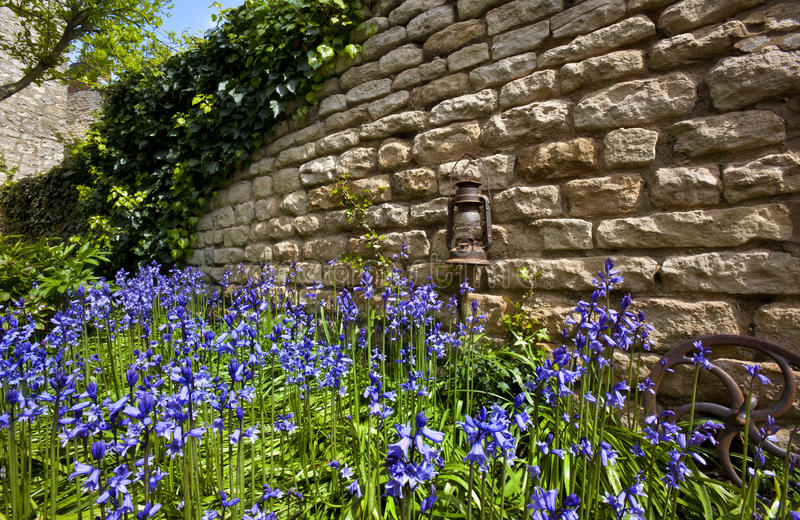 Bluebells - Old Stone Wall - England. English Bluebells (Hyacinthoides nonscripta) by an old stone wall in a farmhouse garden in spring. Slingsby village in stock photos