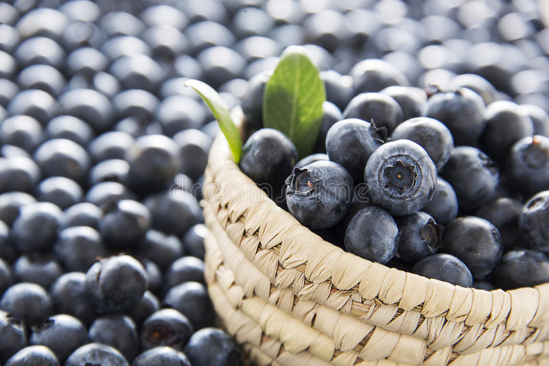 Blueberrie bowl royalty free stock images