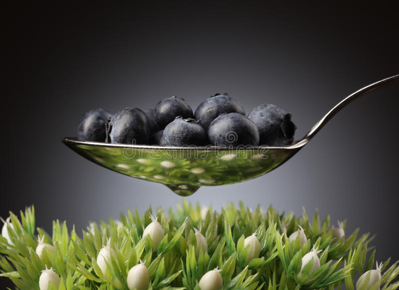 Download Blueberries stock photo. Image of healthy, reflection - 10310906