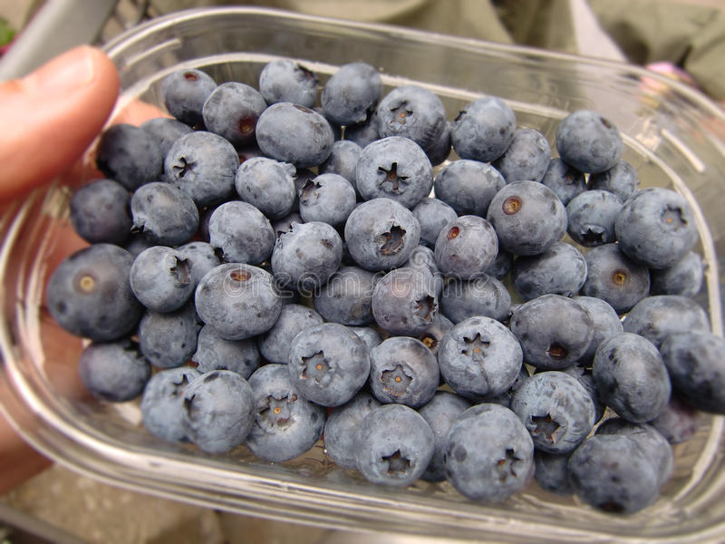 Download Blueberries stock image. Image of products, healthy, horizontal - 16278443