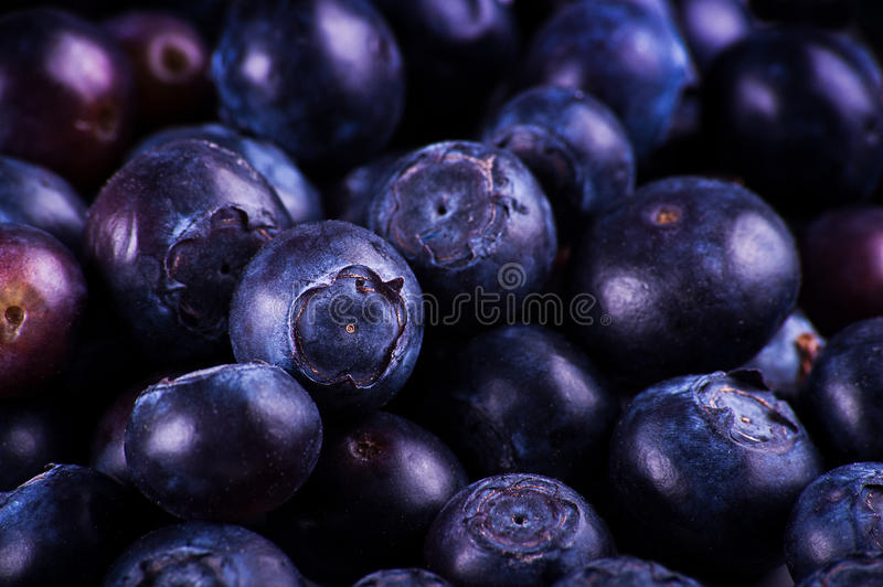 Download Blueberries stock photo. Image of purple, still, close - 23260346