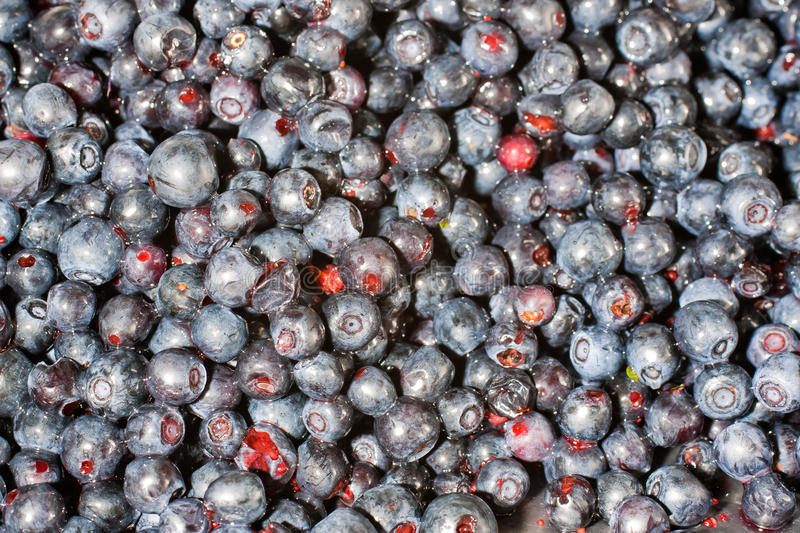 Download Blueberries stock photo. Image of food, holiday, delouses - 25844960