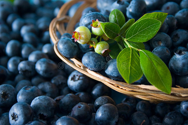 Blueberries. Fresh ripe bluberries with leaves