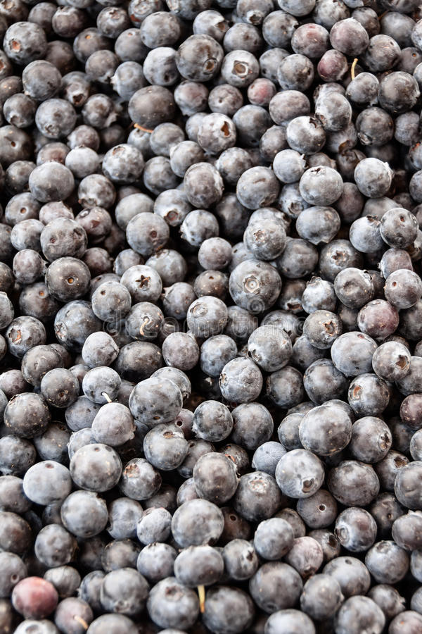 Blueberries. An abundance of blueberries on display at the local farmer's market royalty free stock images