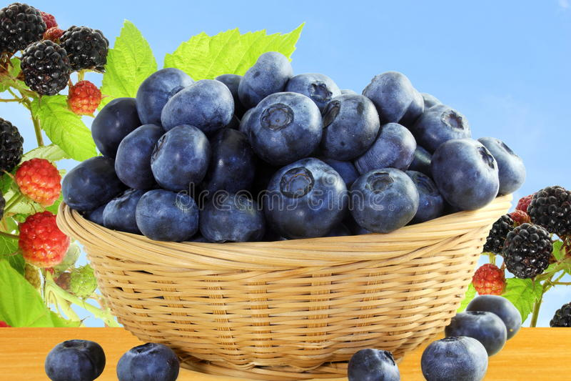 Blueberries in bamboo basket with blackberry closeup on sky background stock images
