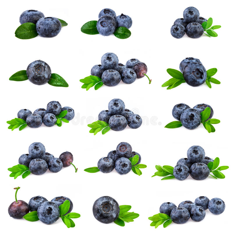 Blueberries Collection. Fresh blueberry with leaf isolated on white royalty free stock images