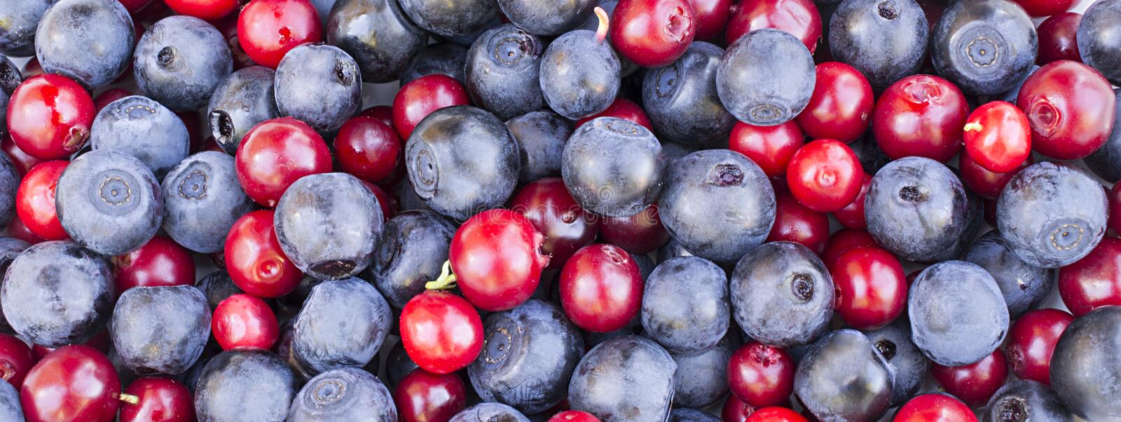 Blueberries and cowberries cranberry stock photography