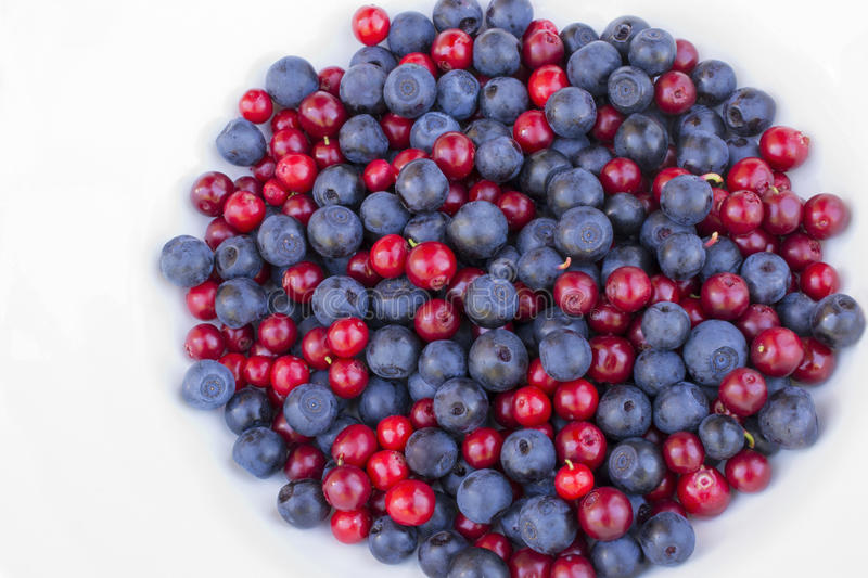 Blueberries and cowberries cranberry royalty free stock images