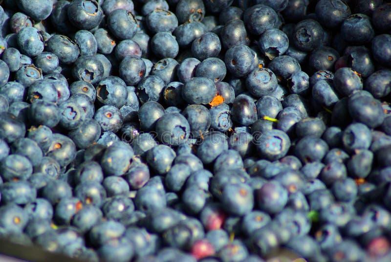 Blueberries, Farmers Market, Town Square, Jackson, Wyoming Free Public Domain Cc0 Image