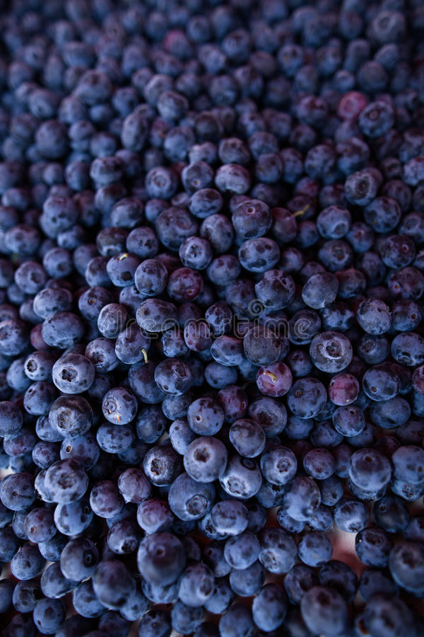 Blueberries. Fresh, ripe and delicious blueberries stock photography