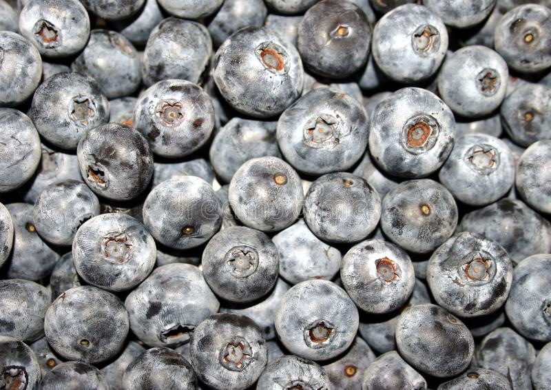 Blueberries Galore Stock Photography