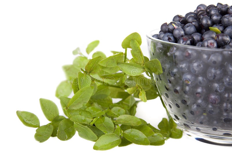 Download Blueberries In A Glass Bowl Stock Photo - Image: 20341930