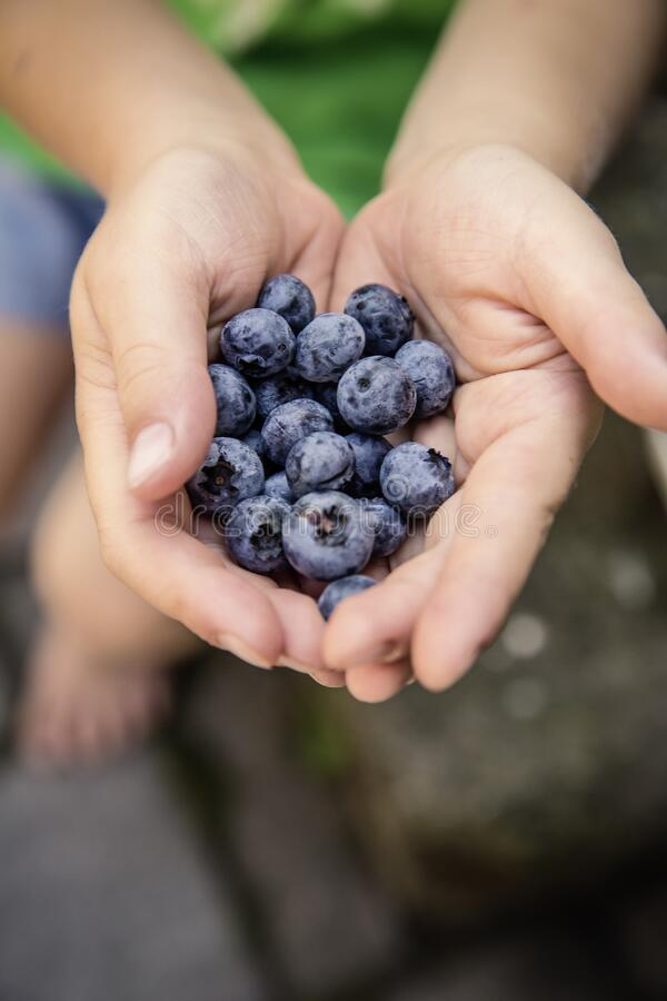 Blueberries on Hand Shallow Focus Photography royalty free stock photography
