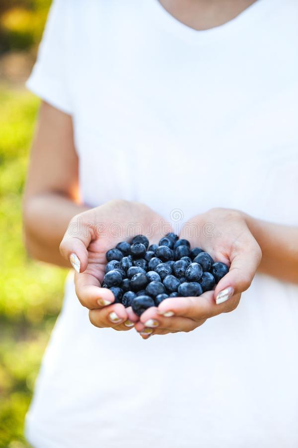 Blueberries In The Hands Of Farmers, Women`s Hands. Fruits ...