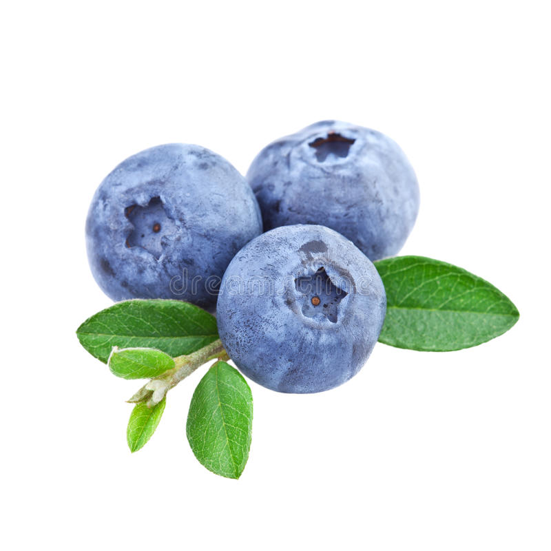 Blueberries isolated stock photography