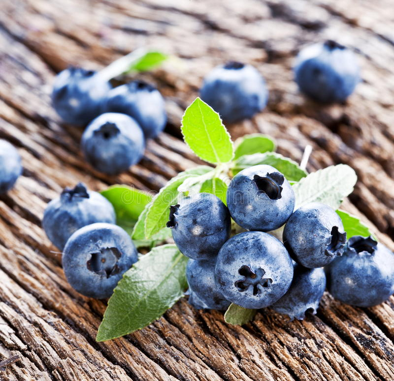 Download Blueberries with leaves stock photo. Image of whortleberry - 26447438