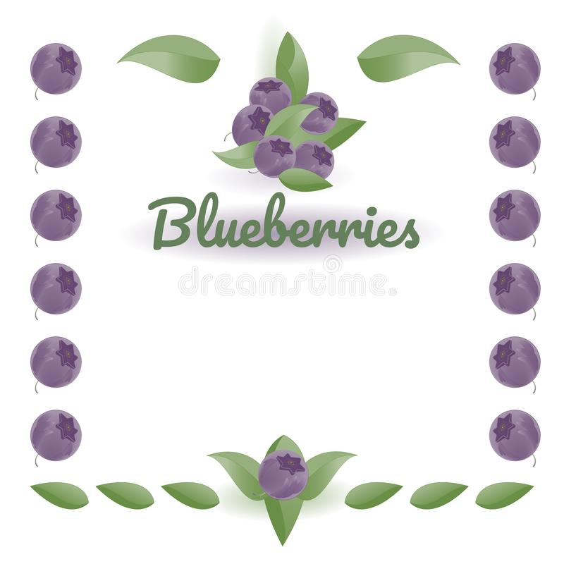 Blueberries and leaves, natural colors. Vector drawing with text for label, farm signboard design, logo. Isolated objects on  white background royalty free illustration