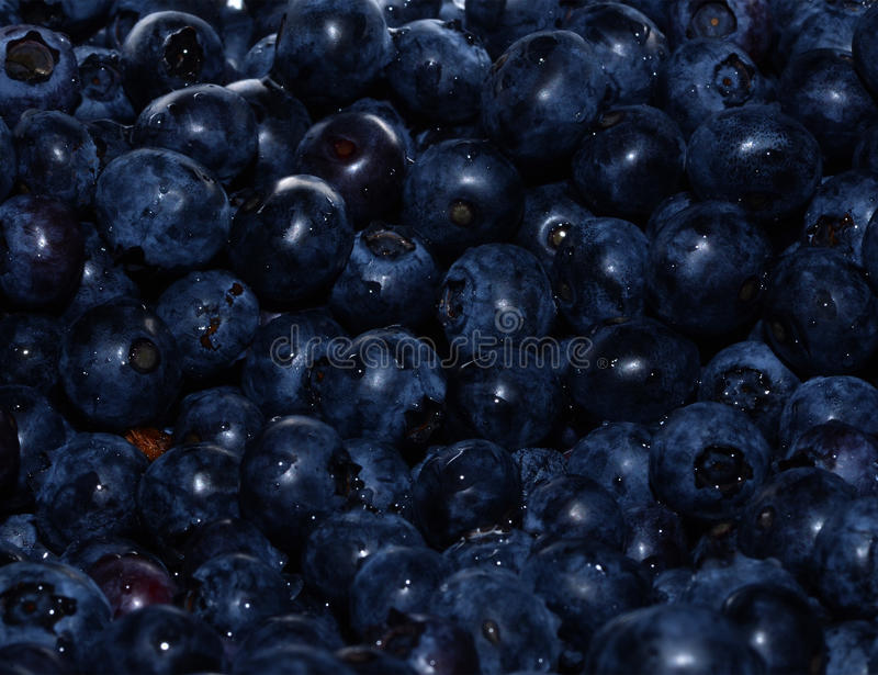 Download Blueberries stock photo. Image of fresh, blueberries - 97550926