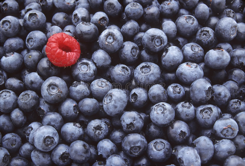 Download Blueberries And One Raspberry Stock Image - Image: 4384477