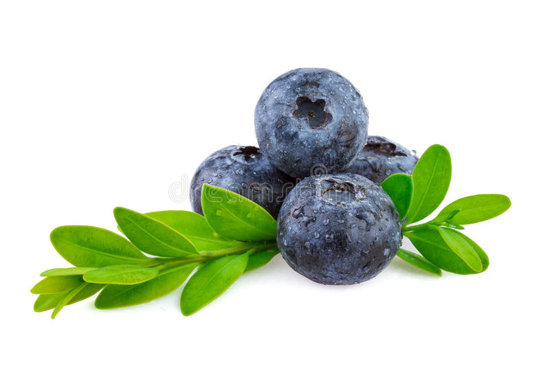 Blueberries over white, organic plant with leaves. Blueberries over white, organic plant with leaves isolated on white background royalty free stock photo